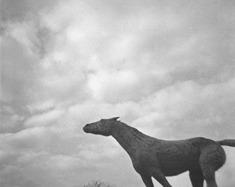 Running Horse Statue Genuine Lomography Film Photo - 8x8 - stormy, weather, black and white