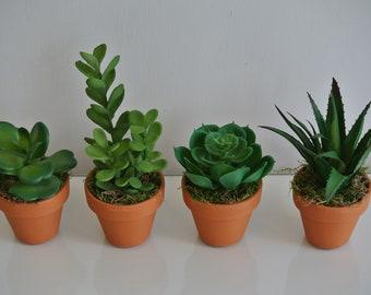 Mini Succulent set in terracotta pots