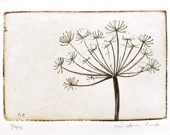 original etching of meadow cow parsley