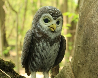 Made to order (this very item is alredy SOLD) Pygmy owl, Needle felted bird, Felted animals, Faux taxidermy, Cute owl, Owlet, Soft sculpture