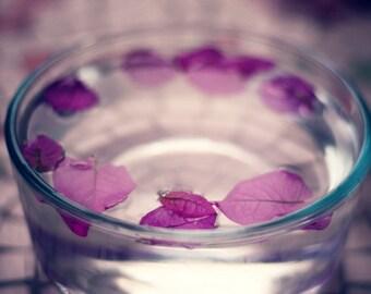 Petals - 8x12 Fine Art Photograph
