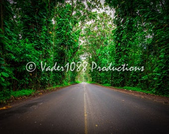 Road Surrounded by Tropical Forest, Kauai Hawaii