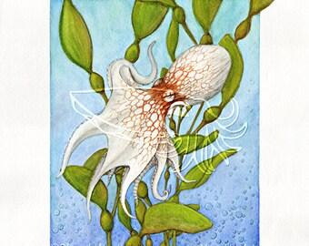 Octopus in Kelp Forest, 4x5 Print on Fugi Crystal Archive Matte - Unframed