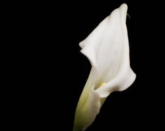 White Calla Lily, Nature Photograph, Floral Wall Art, Flower Print - Green, Black, Botanical Photography, Nursery Wall, Feminine Home Decor