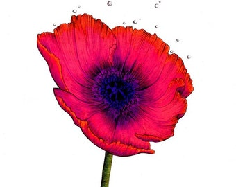 """Red Poppy Print: Digital print of a drawing available 5x7"""" or 8x10"""""""