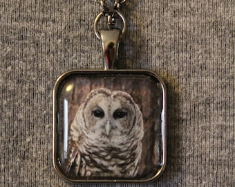 "Barred Owl ""Brewster"" Pendant Necklace"