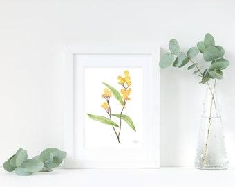 Golden Wattle Original Watercolour Postcard / Mini Painting / Flower Art