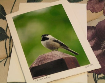 005 Chickadee Greeting Card with a Matching Envelope Perfect Blank All Occasion Note Card