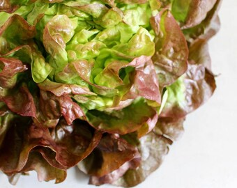 Lettuce Ruby Red 100+ seeds - heirloom seeds - vegetable seeds - garden seeds - lettuce seeds - ruby red lettuce seeds - mesculin mix seeds