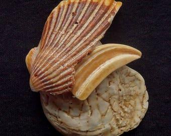 Neocon Shell Pin cinquantanove