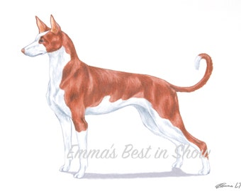 Ibizan Hound Dog - Archival Fine Art Print - AKC Best in Show Champion - Breed Standard - Hound Group - Original Art Print