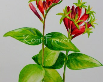 Indian Pink wildflowers, watercolor flowers, Pink root, bright and fun wall decor