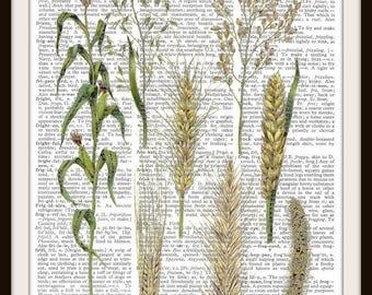 Grain Vintage Illustration  Art Print---Fits 8x10 Mat or Frame