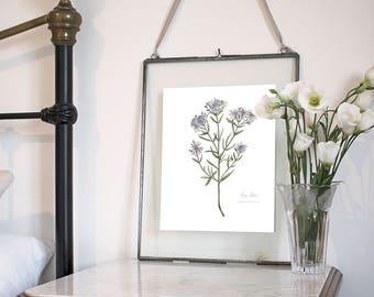 Sea Aster, Botanical Wildflower Watercolour, Art Print