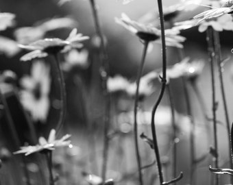 Black and White Flower Photograph.