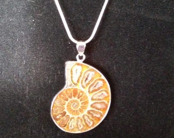 1 3/4 inch long Warm Brown   Ammonite Fossil Gemstone   Silver Pendant on a 24 inch Sterling Chain