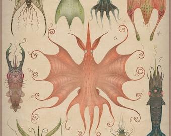 Cephalopodoptera tab V - Art print