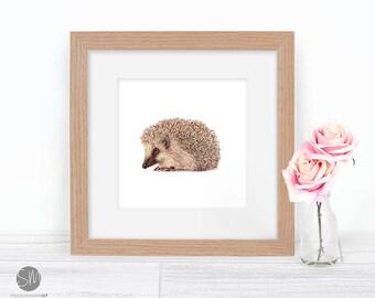 Looking Sharp Hedgehog Framed Print Artwork Picture