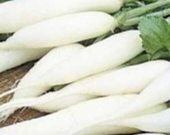 1500 Seeds White Icicle Radish Seeds
