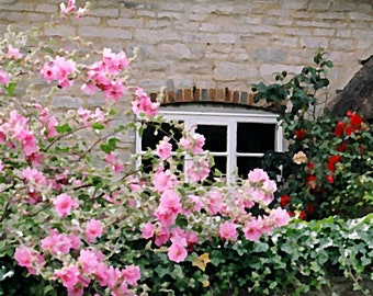 Cottage window with pink roses, Dorset, England