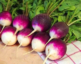 300 SEEDS - Radish Diana - Two tones radish - Purple radish seeds - vegetable seeds