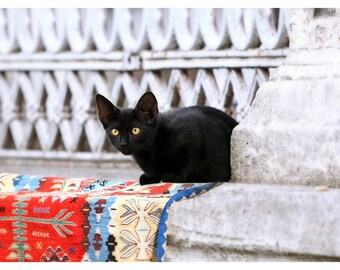 Istanbul, Turkey, travel photography, black kitten, Turkish carpet, fine art photography, for cat lovers, 16x24 print, cat art print