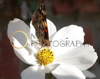 Butterfly Resting on Flower