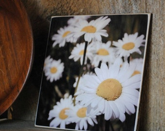 Daisies Photograph Mounted on Wood