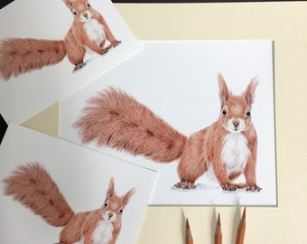 Bartleby the Red Squirrel Fine art Prints