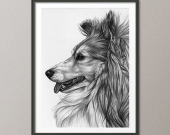 Dog wall art print / Dog print / Collie / pencil / Digital / Art / Print / Graphic Art Printable / INSTANT DOWNLOAD