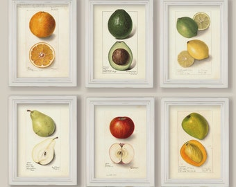 Set Of 6 Botanical Fruit Prints Gallery Wall Kitchen Decor Apple Pear Avocado Lemon Orange Mango A4 or 5x7
