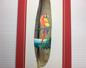 Scarlet Macaw, Macaw Parrot, Painted Feather, Lapa Roja, Costa Rica Bird, Scarlet Macaw Costa Rica, Macaw On Branch, Costa Rica, Red Frame