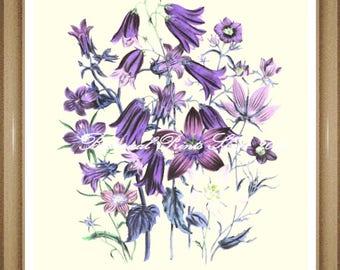 "Botanical Print.  Campanula. Flower Print. Flower Art. Botanical Wall Art. 8x10"""