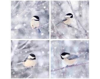 Bird Photography Set, Winter Decor, Chickadee Photos, Bird Art Set, Animal Art Print Set, Winter Photos, Set of 4 Fine Art Prints