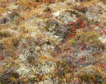 TOMBSTONE TUNDRA, Yukon Park, Landscape nature photography, Wildflowers, Arctic tundra,