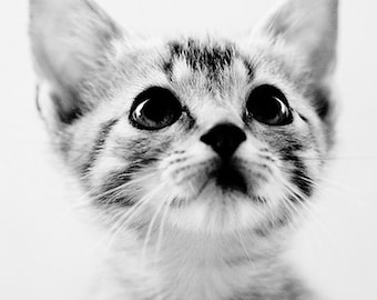 baby animal photography, cat, black and white art, kitten, nursery decor, square kitten photo, Sweet Kitten