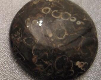 Turritella Agate Fossil Cabochon 1pc