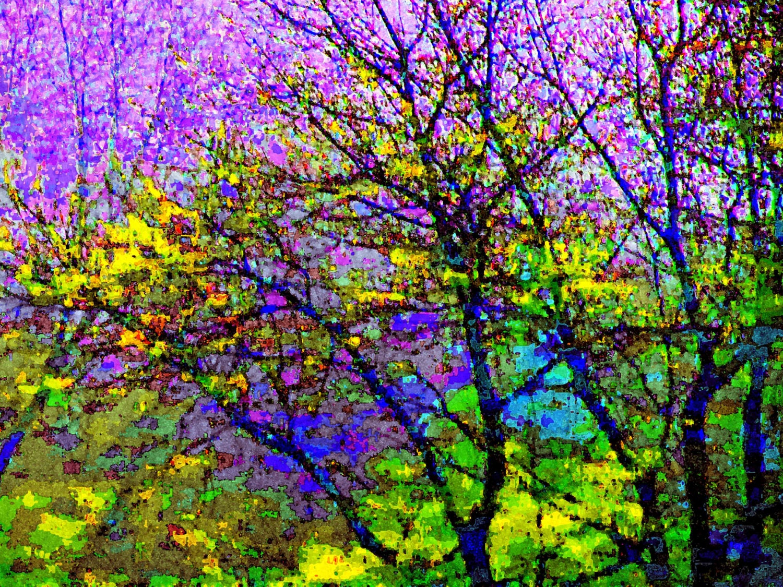 Purple Tree Majesty 4x6 Modern Fine Art Color Photography