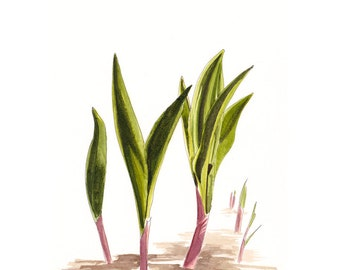 Baby Ramps - #122 - Archival Art Print