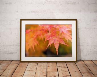Metal Print - Autumn, Photography - Metalic Aluminum Print, Fine Art, Wall Art, Nature Print, Home Decor, Photography