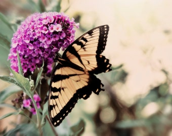 Wings & Wishes - Butterfly Photography - Butterfly Bush - Yellow Butterfly - Nature Art Print - Butterfly Wings - Nature Photogtaphy