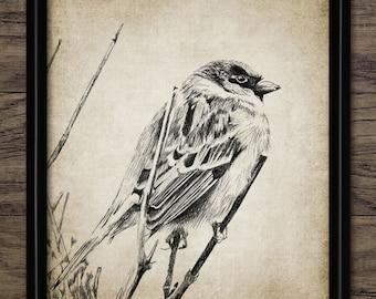 Sparrow Bird Print - Bird Illustration - Garden Bird - Bird Art - Digital Art - Printable Art - Single Print #1054 - INSTANT DOWNLOAD