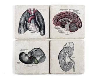 Human Anatomy Coasters, Vintage Illustrations, Set of 4, Pick Your Own
