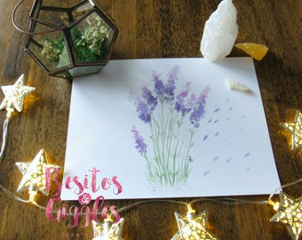 Lavender Watercolor illustration PRINT/ Watercolor plants