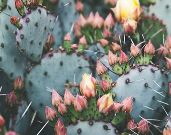 Cactus Photography, Bohemian Print, Southwest Print, Desert art, Boho Decor, Prickly Pear Photography, Poster Size Print, pink, coachella