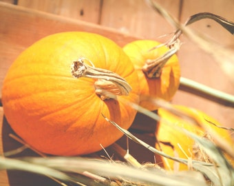 ORANGE PUMPKIN 1