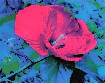 Imprint 002 8x10 - Hibiscus Photo on Canvas