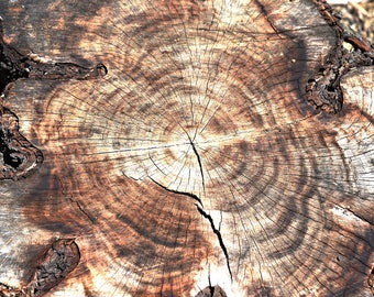 Tree Ring Wall Art, Photograph, Tree Ring Print, Tree Ring Art Print, Tree Ring Art, Nature Photography, Tree Photography