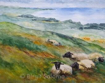 Sheep on Rügen, Ostsee, Baltic Sea, sheep, fine-print 20x30 cm, poster 30x40 cm, fine-print 29, 7x42 cm, original watercolor 36x48 cm