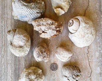 LARGE Marine Fossils - Over 5 Pounds with Free US Shipping